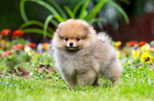 Cute Dog Pics