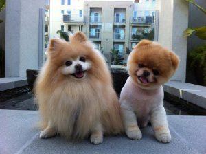 cute dogs 6