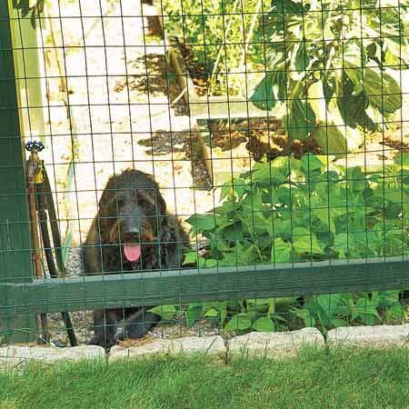 Choose an Electric Fence for Your Dog